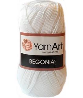 BEGONIA 1000
